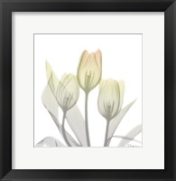 Sunday Morning Tulips Two Framed Print