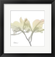 Sunday Morning Orchid Framed Print