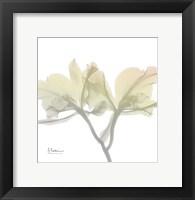 Sunday Morning Orchid Framed Print
