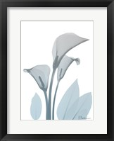 Serene Calla Lily Framed Print