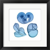Blue Ombre Sea Life 2 Framed Print