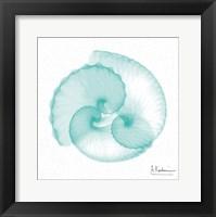 Dry Argonaut Seafoam Framed Print
