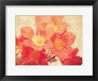 Framed Sun Fire Florals