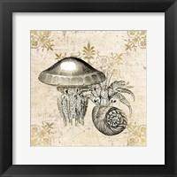 Framed Marine Life