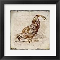 Vintage Rooster Square 3 Framed Print