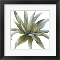 Wonderous Rays Framed Print