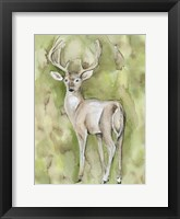 Sterling Deer Framed Print