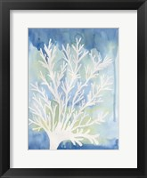 Framed Blue Coral