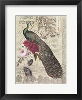 Framed New Peacock 1