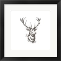 Big Buck 2 Framed Print