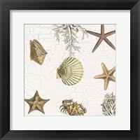 Coastal Joy Framed Print