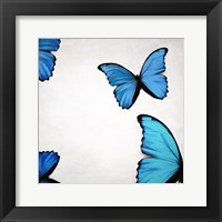 Framed Blue Morphos