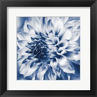 Framed Dahlia Navy 1