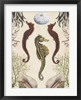 Antiquarian Menagerie - Seahorse Framed Print
