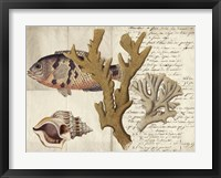Sealife Journal I Framed Print