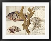 Sealife Journal I Framed Print