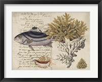 Sealife Journal III Framed Print