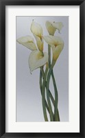 Callas on Silver I Framed Print