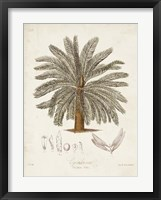 Antique Tropical Palm I Framed Print