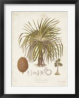 Antique Tropical Palm II Framed Print