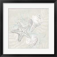 Weathered Shell Sketch I Framed Print