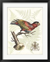 Regal Parrots I Framed Print
