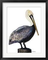 Framed Pelican