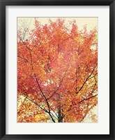 Framed October Tree