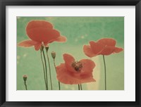 Framed Peaceful Poppies