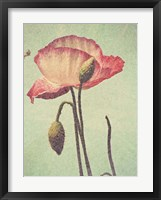 Framed Poppy with Stem