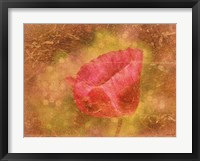 Framed Aura of a Poppy