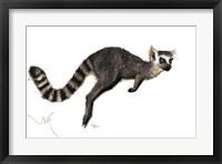 Framed Lemuroo