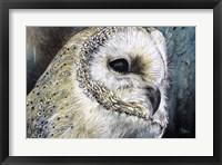 Framed Barn Owl Detail