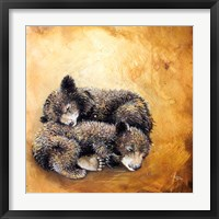 Framed Bearlings