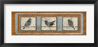 Framed Three Birds