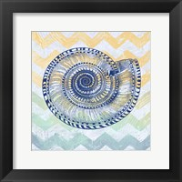 Sea Creatures - Shell I Framed Print