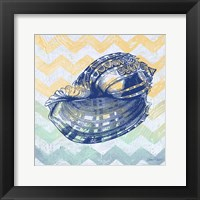 Framed Sea Creatures -Shell II
