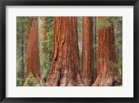 Framed Tree Trunks