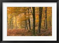 Framed Fall Forest
