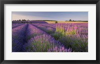 Framed Fields of Lavander