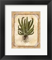 Fern 4 Framed Print