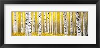 Framed Panor Aspens Yellow Floor