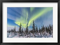 Framed Aurora borealis over the Trees in Churchill, Manitoba, Canada