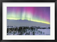 Framed Pink Aurora over boreal forest in Canada
