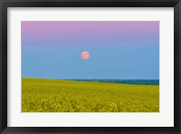 Framed Supermoon rising above a canola field in southern Alberta, Canada