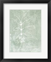 Essential Botanicals I Framed Print