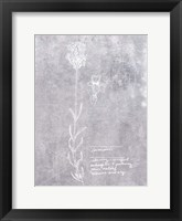 Essential Botanicals II Framed Print