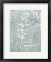 Essential Botanicals III Framed Print