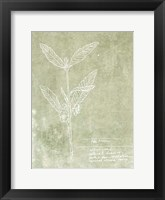 Essential Botanicals IV Framed Print