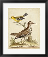 Antique Bird Menagerie I Framed Print